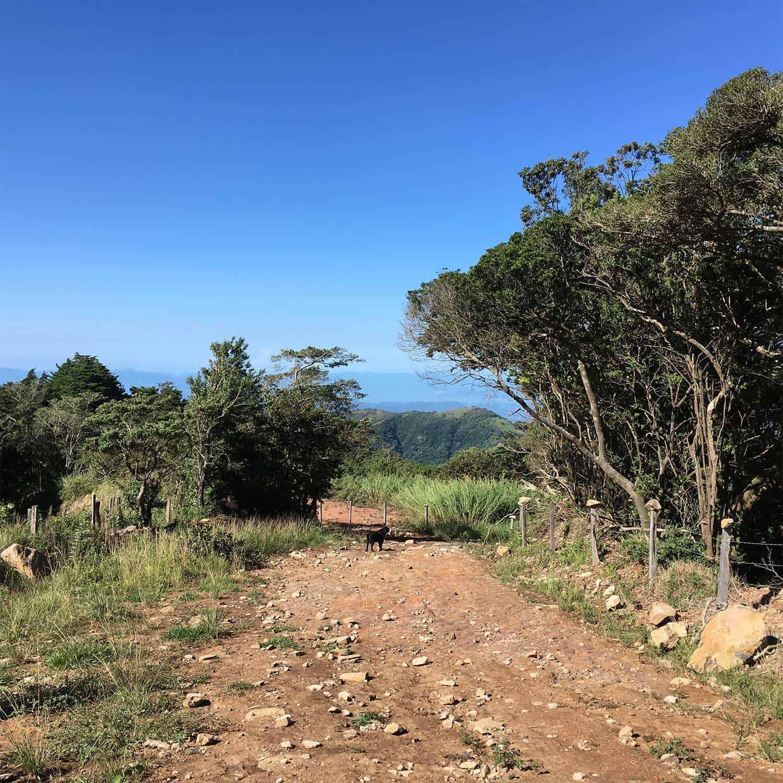 path_monteverde