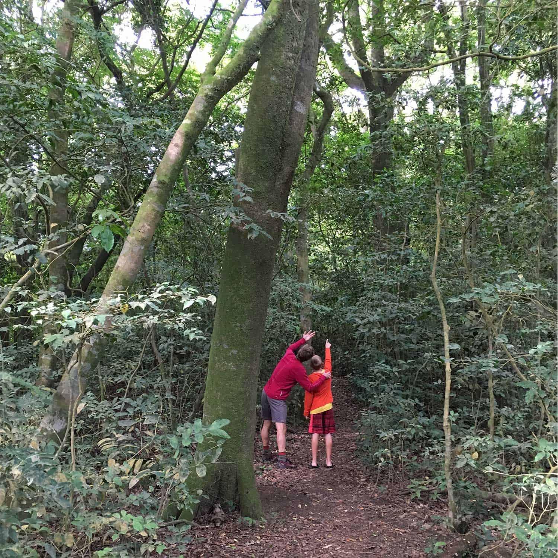 trees_monteverde